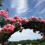 深大植物園バラ展⑤